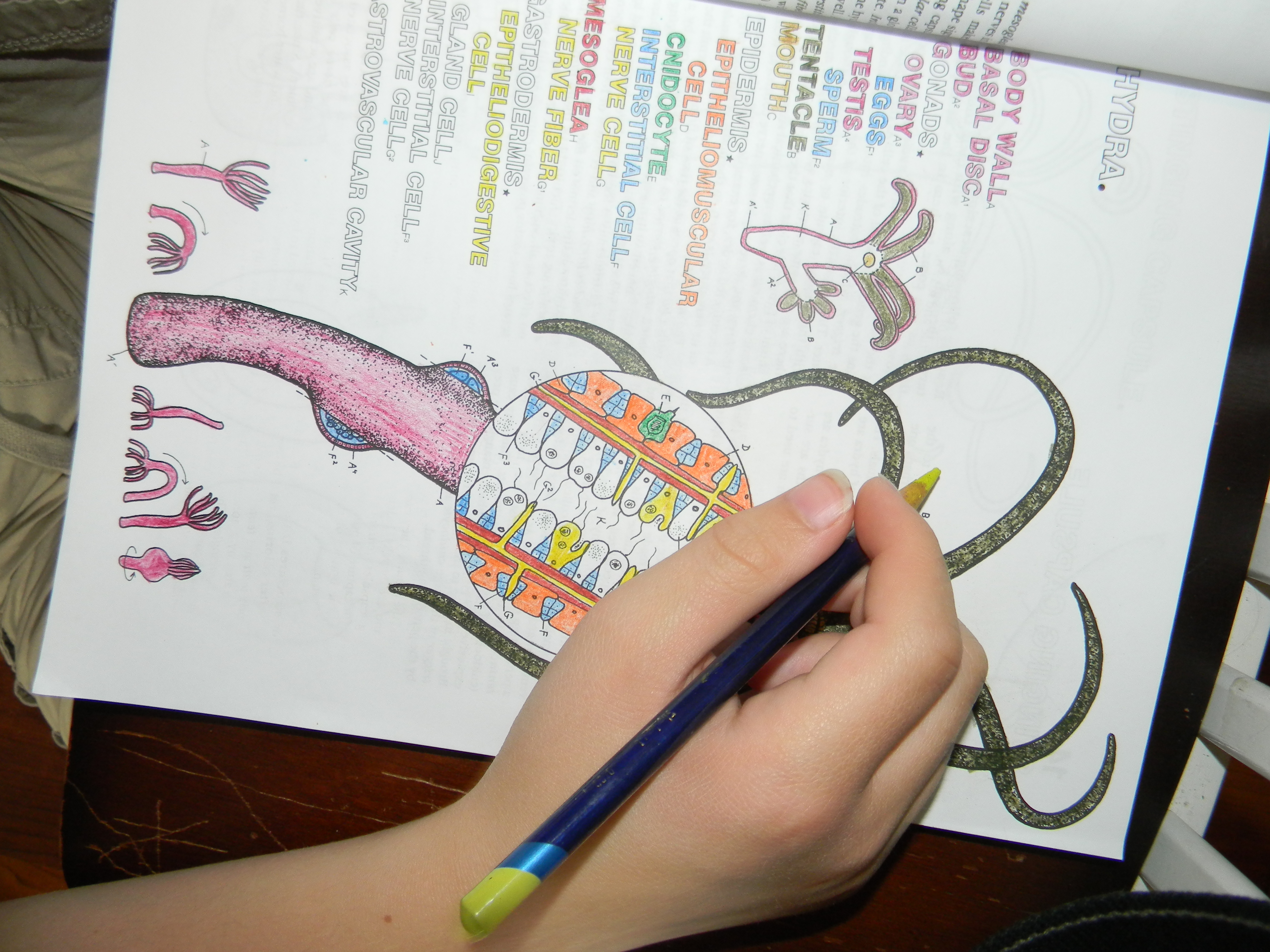 Beautiful Zoology Coloring Book Gallery - New Coloring Pages ...